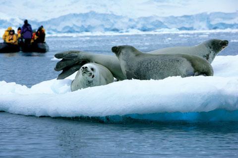 185-seals-zodiac-high-rez.jpg