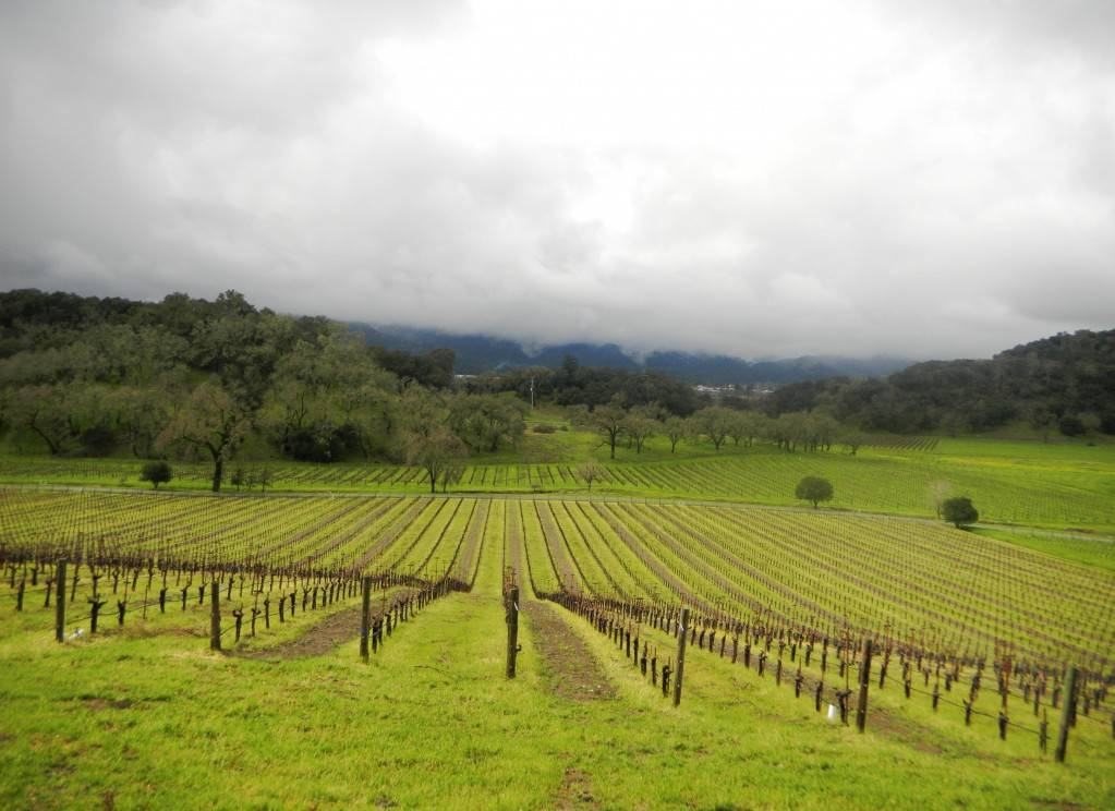 scenic vineyards at joseph phelps winery