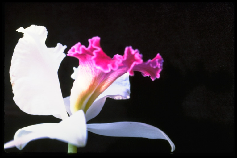 leas flowers