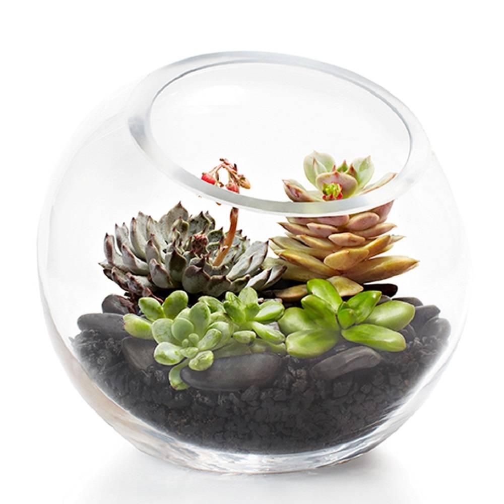 orig-fishbowl