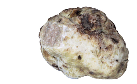whitetruffle_blog.jpg
